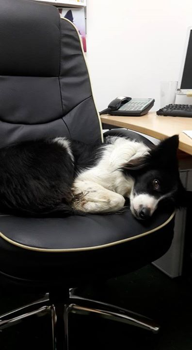 Holly checking the new office chairs are...